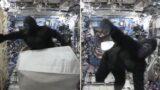 Astronaut terrorises international space station in monkey suit!