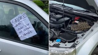 Anonymous bloke warns sheila of snake in car
