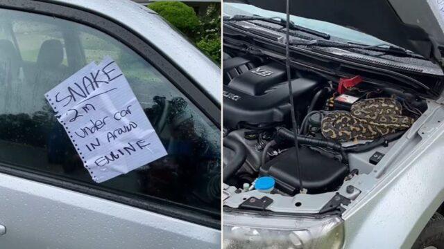 Anonymous bloke warns sheila of snake in car