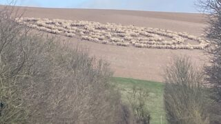 "Bloke discovers mysterious ""sheep circle"" containing hundreds of sheep"