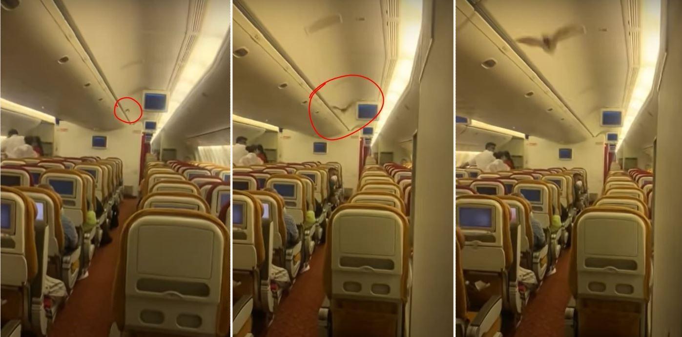 Loose bat on Air India flight forces it to turn around mid-flight