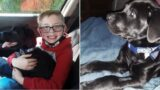 Little legend receives surprise from Pokémon after selling his collection to save his dog