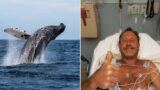 Lobster diver swallowed whole by humpback whale while fishing