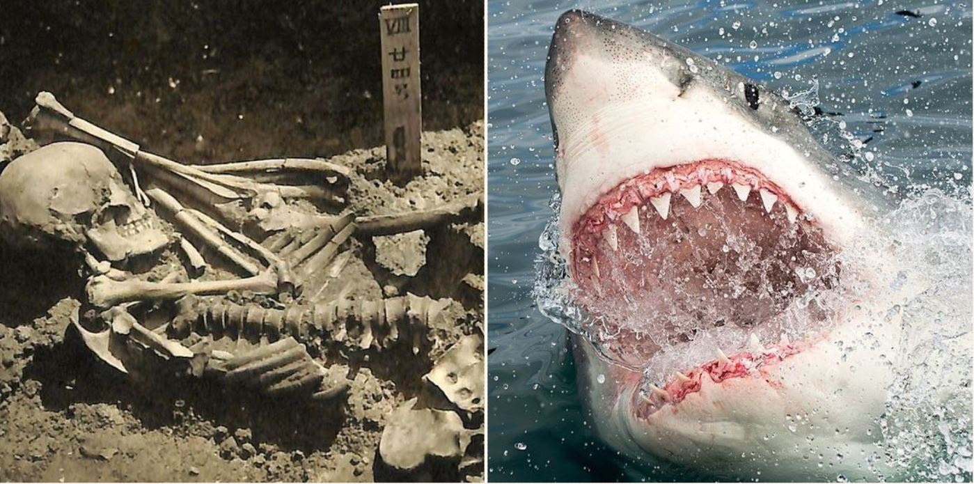 Scientists find oldest human shark attack remains, over 3,000 years old!