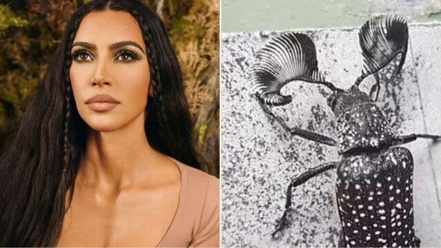Meet the Aussie beetle giving Kim Kardashian a run for her money!