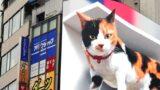 A giant 3D Cat has taken over one of Tokyo's biggest billboards
