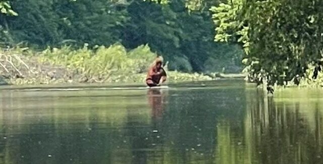 New Bigfoot sighting leaves experts baffled!