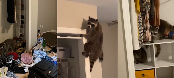 Sheila live tweets from her bedroom as racoons break into her NY apartment