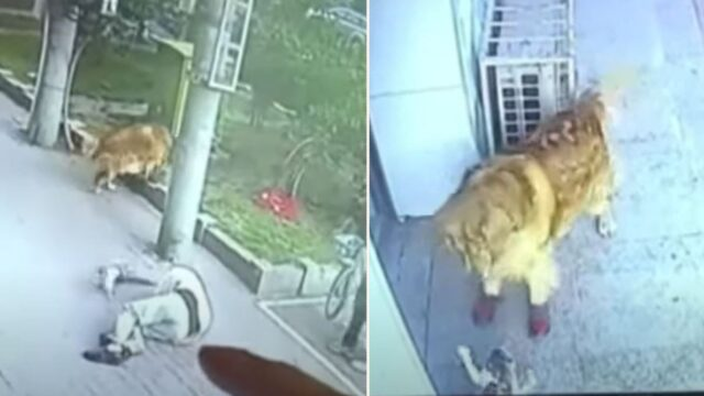 Bizarre series of events sees a cat KO a pensioner then fight sock wearing dog