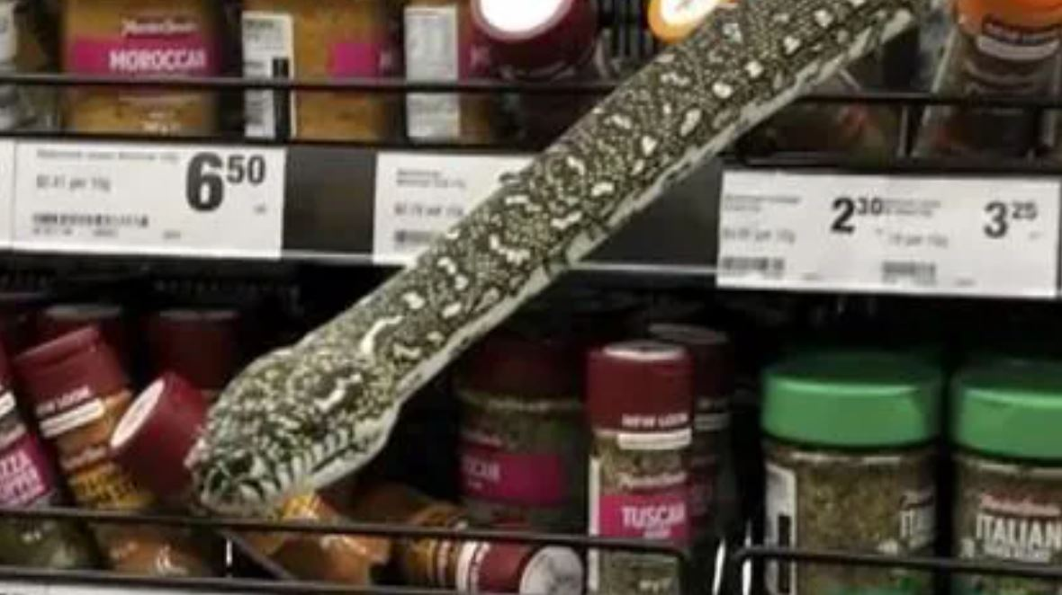 Massive bloody python says hello in Sydney supermarket