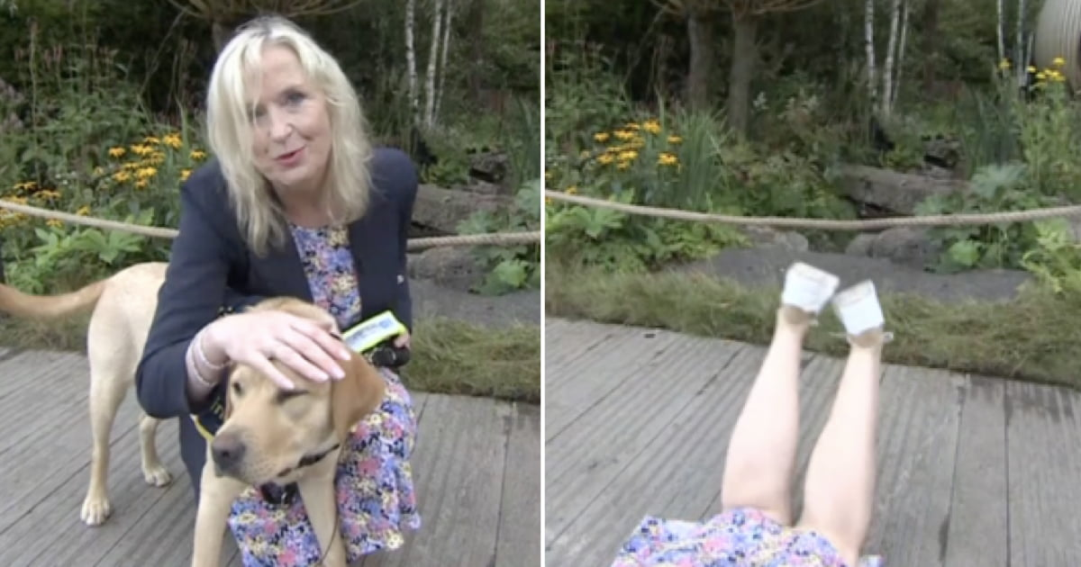 TV Presenter taken out and dragged to the ground by guide dog on live TV