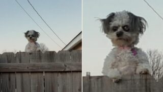 Is this the creepiest dog in the world?