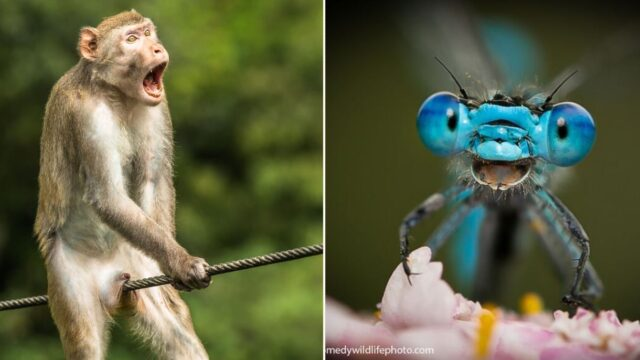 The 2021 Comedy wildlife photo finalists are in